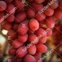 termek383/crimson-seedless-383-660343091-1200.jpg / Crimson seedless