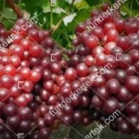 termek389/ruby-king-seedless-389-138430889-1200.jpg / Ruby king seedless csemegeszőlő