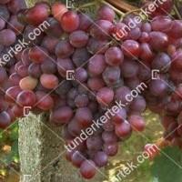 termek411/rizamat-411-439087795-1200.jpg / Rizamat