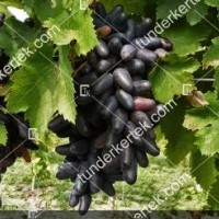 termek412/suvenir-412-1740169418-1200.jpg / Souvenir csemegeszőlő