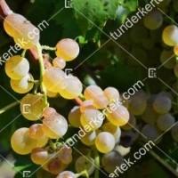 termek417/bianca-417-145883900-1200.jpg / Bianca
