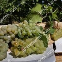 termek420/chardonnay-420-1029315586-1200.jpg / Chardonnay