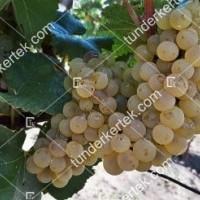 termek420/chardonnay-420-1119330447-1200.jpg / Chardonnay