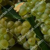 termek420/chardonnay-420-1535711689-1200.jpg / Chardonnay