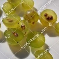termek420/chardonnay-420-1538885175-1200.jpg / Chardonnay
