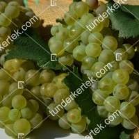 termek420/chardonnay-420-1881444734-1200.jpg / Chardonnay