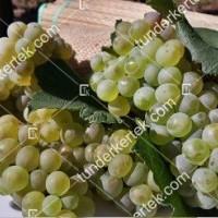termek420/chardonnay-420-1937192783-1200.jpg / Chardonnay