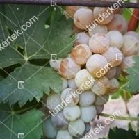 termek421/cserszegi-fuszeres-421-1897855866-1200.jpg / Cserszegi fűszeres