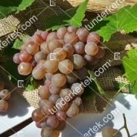 termek423/generosa-423-1113626644-1200.jpg / Generosa szőlő