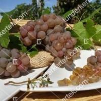 termek423/generosa-423-1131393266-1200.jpg / Generosa szőlő