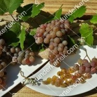 termek423/generosa-423-1573599700-1200.jpg / Generosa szőlő