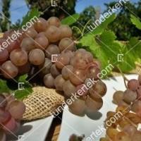 termek423/generosa-423-183903206-1200.jpg / Generosa szőlő