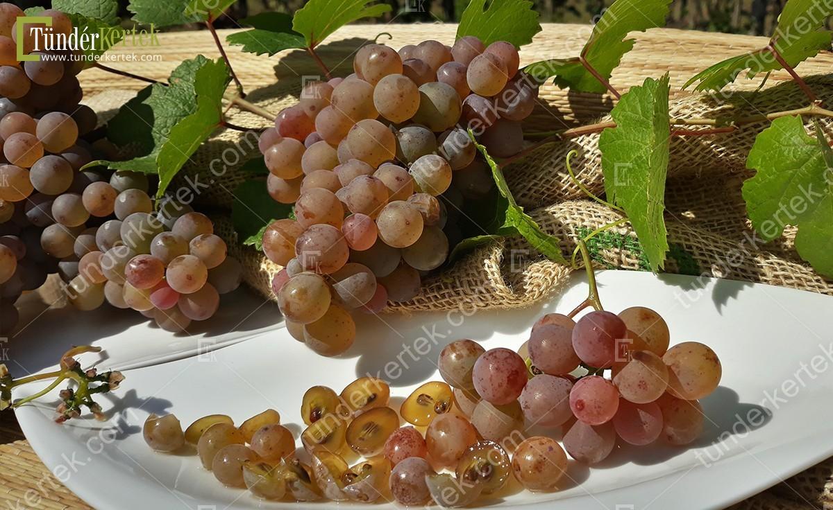 Generosa szőlő
