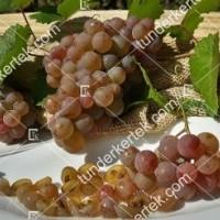 termek423/generosa-423-424458296-1200.jpg / Generosa szőlő