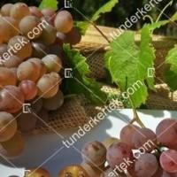termek423/generosa-423-516336333-1200.jpg / Generosa szőlő