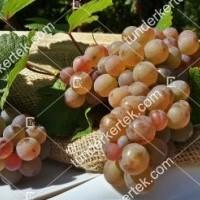 termek423/generosa-423-722688538-1200.jpg / Generosa szőlő