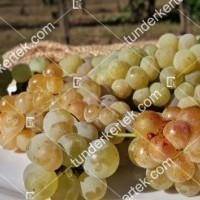 termek426/ottonel-muskotaly-csemegeszolo-426-1381118755-1200.jpg / Ottonel muskotály csemegeszőlő