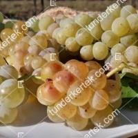 termek426/ottonel-muskotaly-csemegeszolo-426-1601130093-1200.jpg / Ottonel muskotály csemegeszőlő