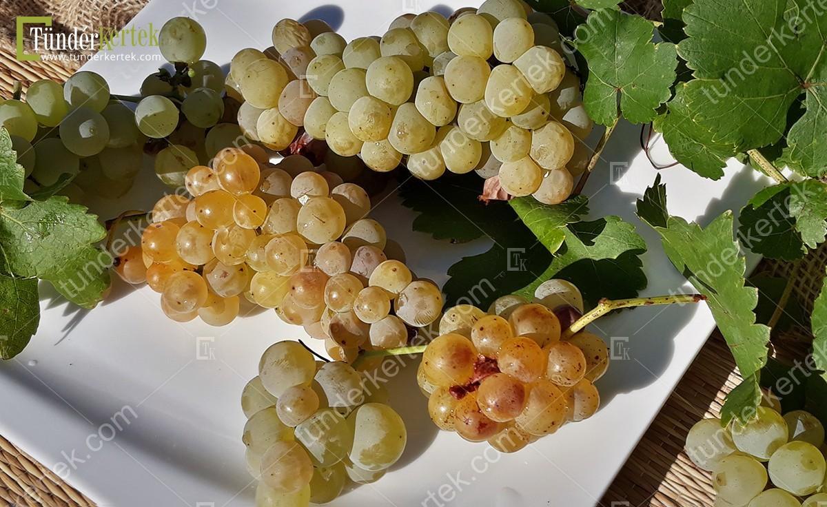 Ottonel muskotály csemegeszőlő