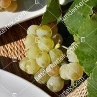 termek426/ottonel-muskotaly-csemegeszolo-426-391512377-1200.jpg / Ottonel muskotály csemegeszőlő