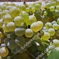 termek427/pinot-blanc-427-1470349980-1200.jpg / Pinot blanc
