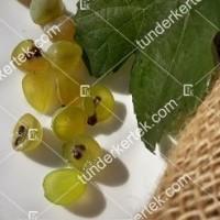 termek427/pinot-blanc-427-578875020-1200.jpg / Pinot blanc