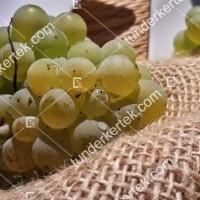 termek427/pinot-blanc-427-971052378-1200.jpg / Pinot blanc