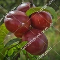 termek456/independence-456-545963088-1200.jpg / Independence