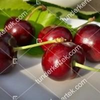 termek477/carmen-cseresznye-477-686520602-1200.jpg / Carmen cseresznye