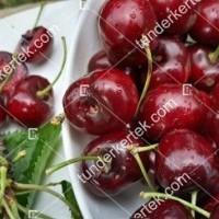 termek479/sunburst-cseresznye-479-2036957502-1200.jpg / Sunburst cseresznye