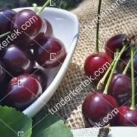 termek481/csengdi-csokros-481-1106981550-1200.jpg / Csengődi csokros