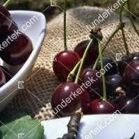 termek481/csengdi-csokros-481-1253887486-1200.jpg / Csengődi csokros