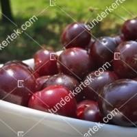 termek481/csengdi-csokros-481-1538292063-1200.jpg / Csengődi csokros