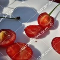 termek509/korai-pipacsmeggy-509-422721147-1200.jpg / Korai pipacsmeggy