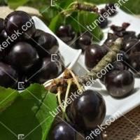 termek511/negus-cseresznye-511-1498147007-1200.jpg / Négus cseresznye