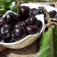 termek511/negus-cseresznye-511-469135851-1200.jpg / Négus cseresznye