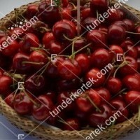 termek512/paulus-cseresznye-512-1413191620-1200.jpg / Paulus (Pál) cseresznye