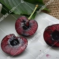 termek512/paulus-cseresznye-512-1421318920-1200.jpg / Paulus (Pál) cseresznye