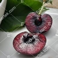 termek512/paulus-cseresznye-512-1630745170-1200.jpg / Paulus (Pál) cseresznye