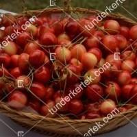 termek514/tarka-cseresznye-514-1430124708-1200.jpg / Tarka cseresznye
