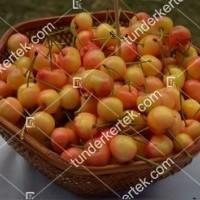 termek515/vega-cseresznye-515-463969864-1200.jpg / Vega cseresznye