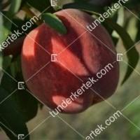 termek541/michelini-szibarack-541-1955760795-1200.jpg / Michelini őszibarack