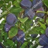 termek550/topfive-550-2043159882-1200.jpg / TopFive®
