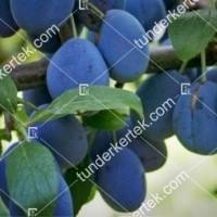 termek550/topfive-550-576318358-1200.jpg / TopFive®