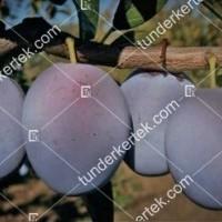 termek558/tophit-558-1825323299-1200.jpg / TopHit®
