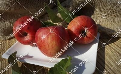 Jonathán (Naményi) alma