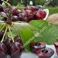 termek589/van-cseresznye-589-1402449423-1200.jpg / Van cseresznye