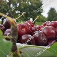 termek589/van-cseresznye-589-2122822518-1200.jpg / Van cseresznye