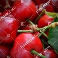 termek601/sandor-cseresznye-601-1192547819-1200.jpg / Sándor cseresznye