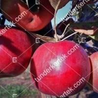 termek610//idared-610-1301214840-1200.jpg / Idared